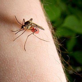 piquete-de-mosquito