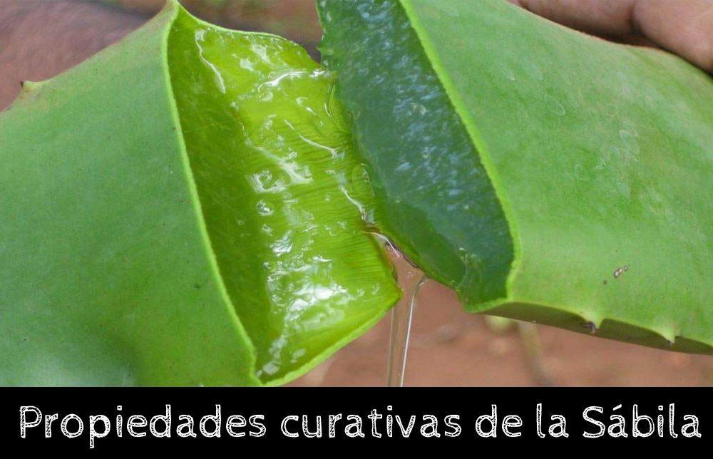 10 Propiedades curativas de la sábila o Aloe Vera - La
