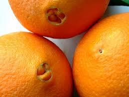 Propiedades de la naranja, variedades