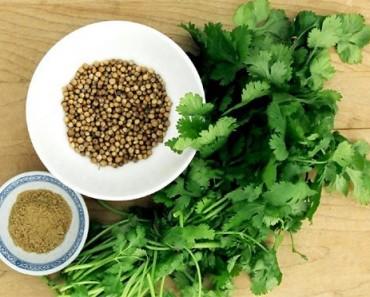 propiedades del cilantro | La Guía de las Vitaminas