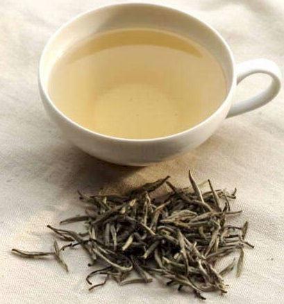 Estudios sobre las propiedades del té blanco | La Guía de las Vitaminas