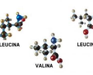 Aminoácidos bcaa