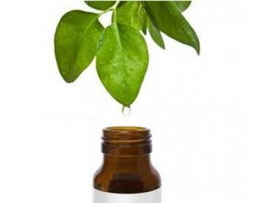 Aceite de árbol de té