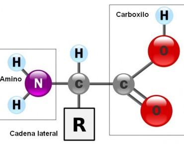 aminoácidos naturales