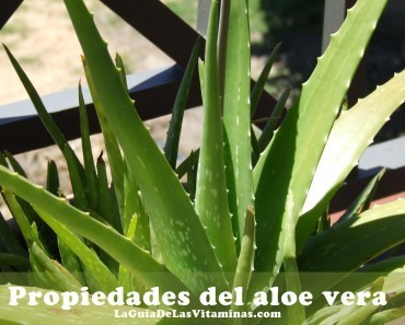 planta-de-savila