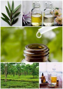 Árbol de té, para qué sirve