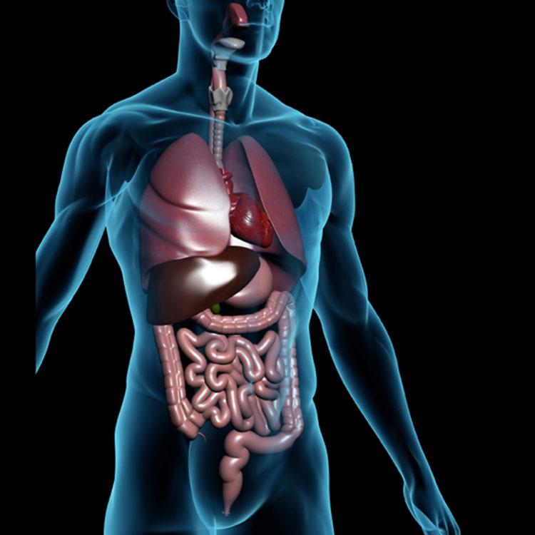 los-diferentes-roles-del-tracto-intestinal