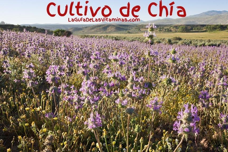 Cultivos De Chia