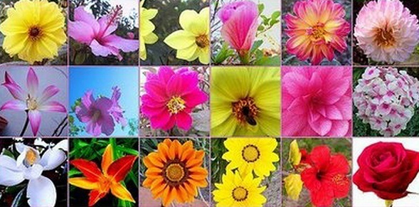 Que flores de bach puedo usar para bajar de peso