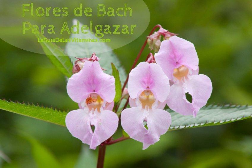 Como usar las flores de bach para adelgazar - La Guía de