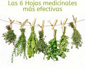 7-hojas-medicinales