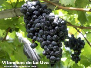 vitaminas-de-la-uva