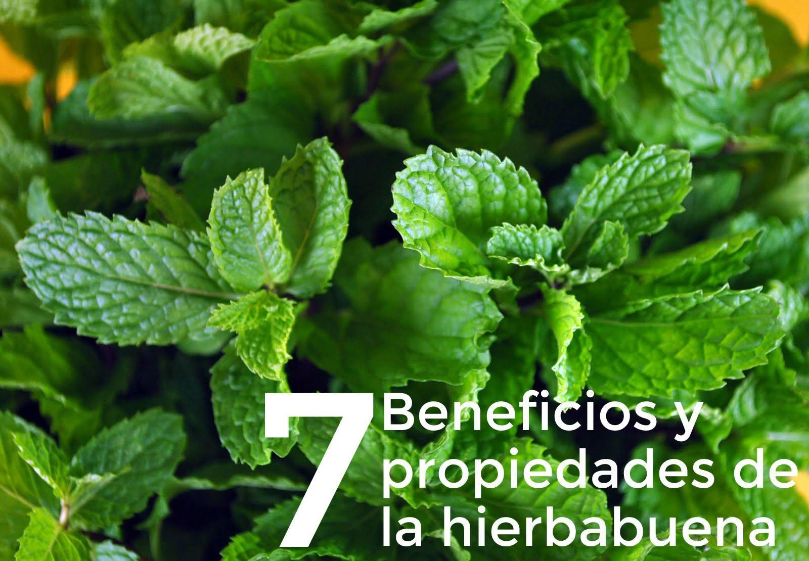7 beneficios y propiedades de la hierbabuena la gu a de for Como se planta la lavanda