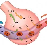 gases-intestinales