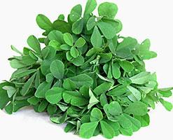 plantas-medicinales-5-fenogreco
