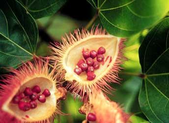 Las plantas medicinales mexicanas y para qu sirven la for Planta decorativa con propiedades medicinales crucigrama
