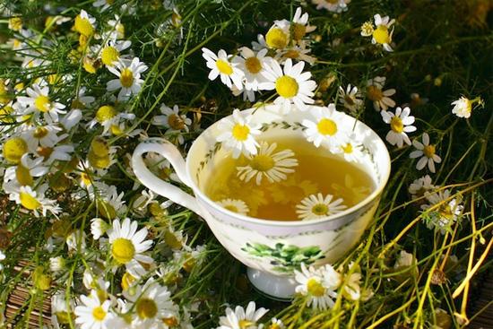 plantas-medicinales-manzanilla
