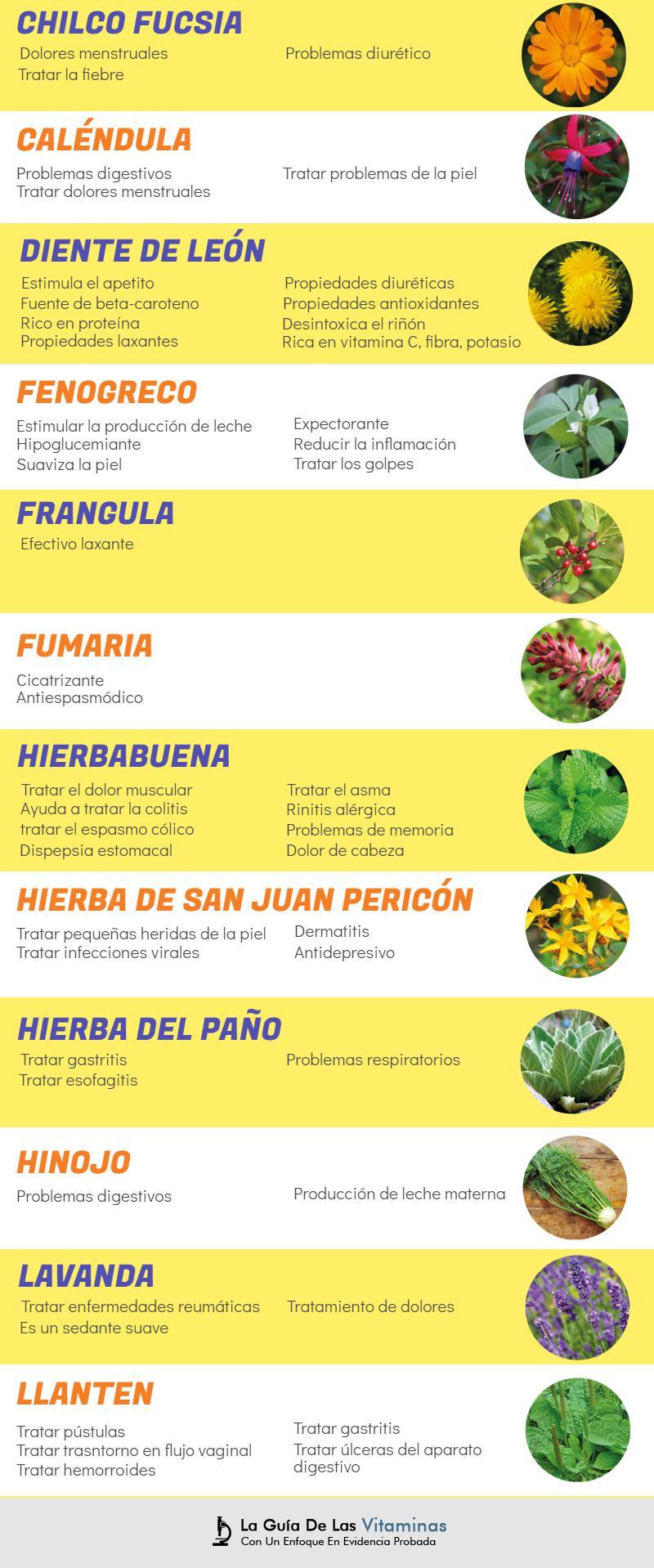 44 plantas medicinales para qu sirven y como cultivarlas for Tipos de hierbas medicinales