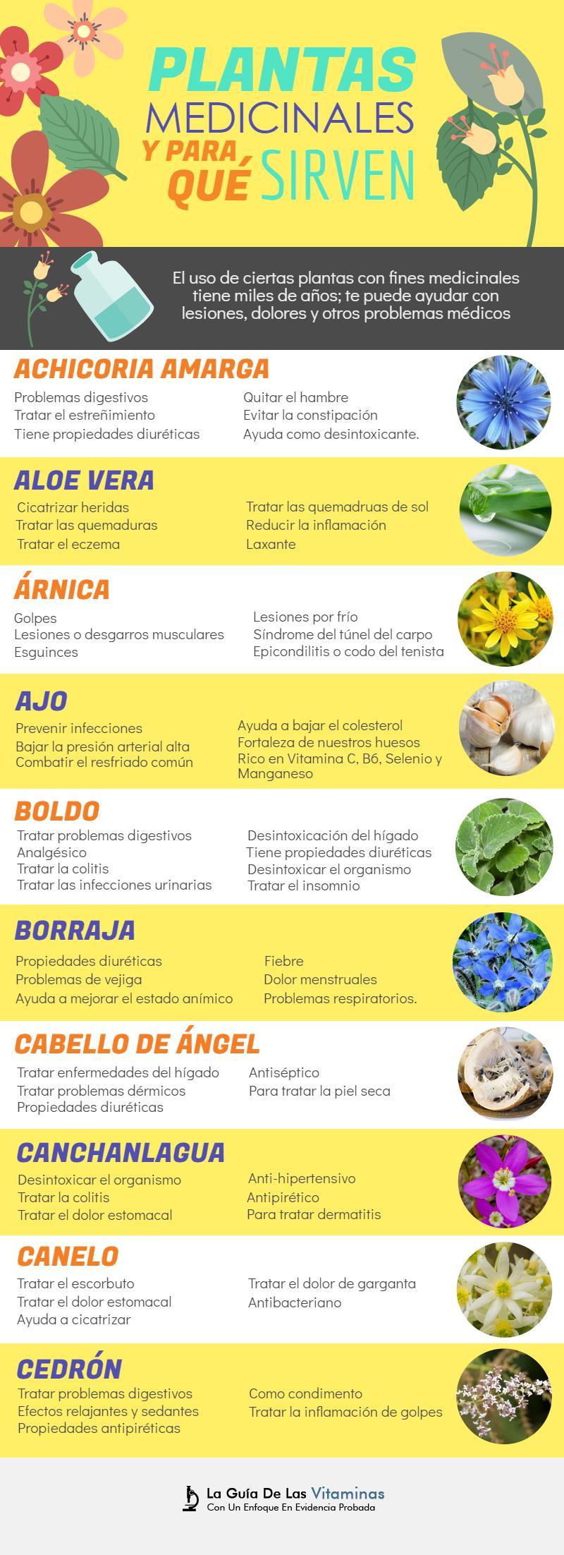44 plantas medicinales para qu sirven y como cultivarlas for 10 plantas ornamentales y para que sirven
