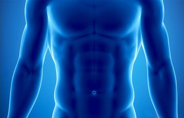 rayos-x-musculos-abdominales - La Guía de las Vitaminas