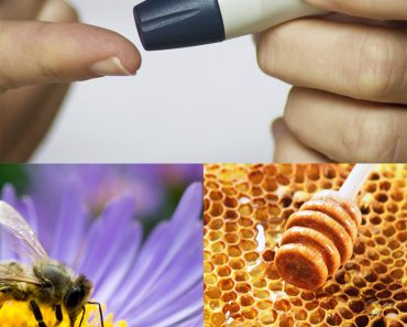 prueba-abeja-flor-panal