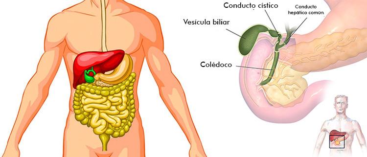 funcion-vesicula-biliar - La Guía de las Vitaminas